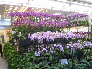 Orchids for Sale at the Flower Market