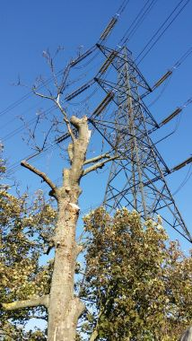 Pylon - Spot the bird