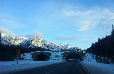 Between Banff and Lake Louise